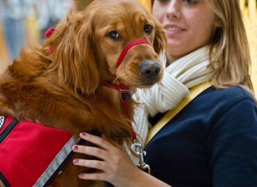 Therapy Dogs: Seeking a Helping Hand, Finding a Paw